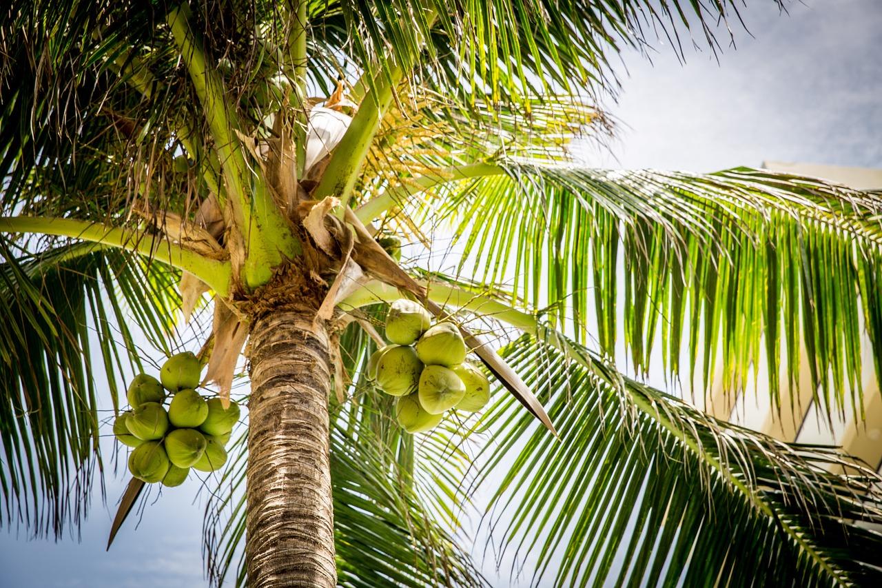 kokosova vlakna za gojenje