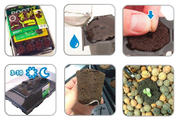 kaljenje semena konoplje