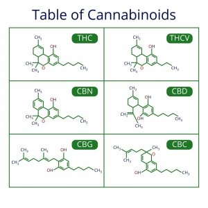 kanabionidi